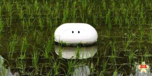 """可助稻农清除杂草的日本""""鸭子机器人"""""""